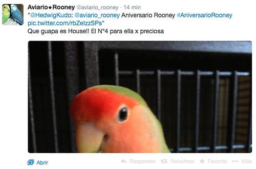 Sorteo Aviario Rooney
