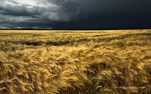 summer storm nature landscape nikon hungary mood abigfave
