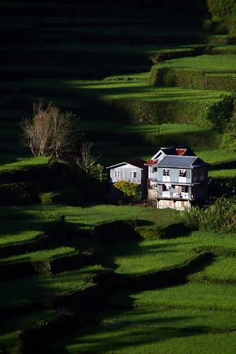 Rice terraces  Barlig