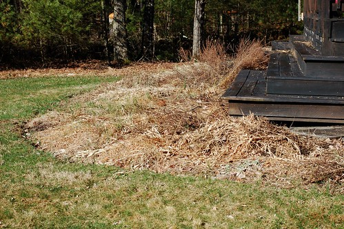 Garden bed overgrown with silvergrass by Eve Fox, the Garden of Eating blog, copyright 2014