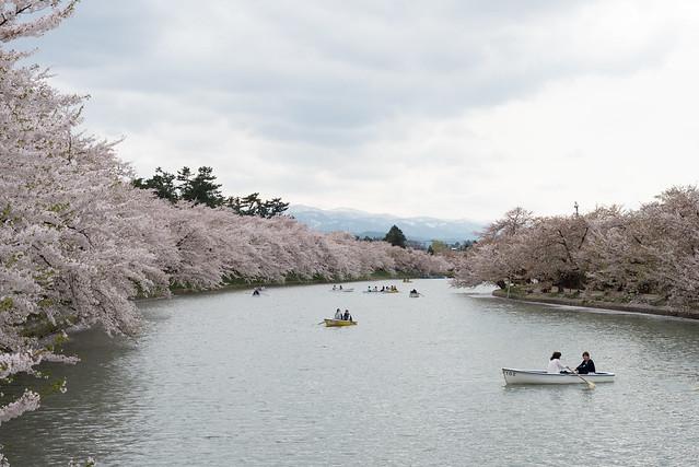 弘前公園 西堀の桜