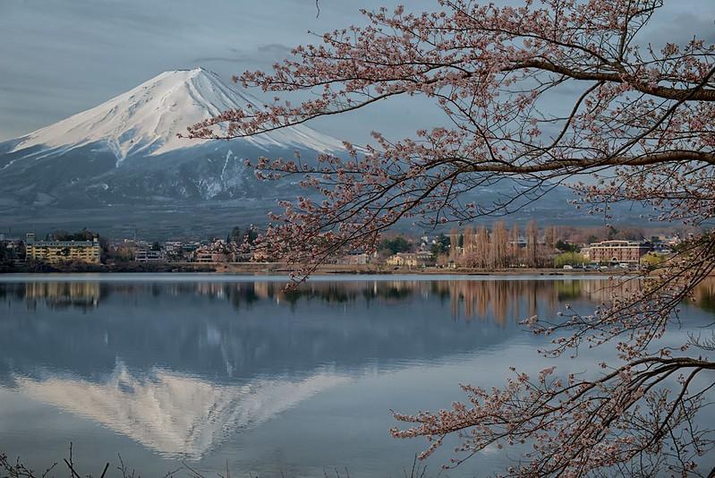 産ヶ崎の桜2014