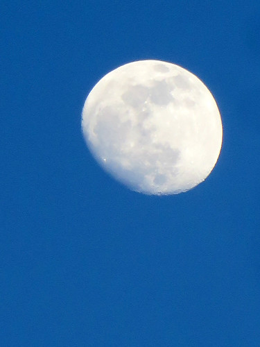 Moon Over Coney Island