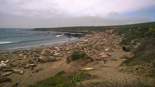 See Elefanten Kolonie südlich von Monterey, CA | Roland Krinner
