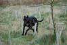 160207 Dog Run-0018