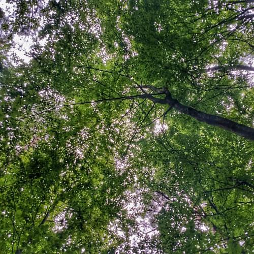 Copas 1, Canopies 1