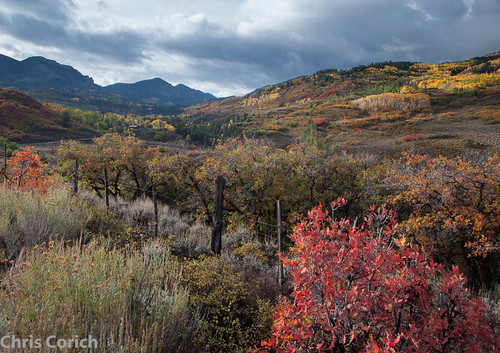 autumn usa canon colorado unitedstates roadtrip co autumncolor ef24105f4l 5dmkii cr864 littlecimarronroad