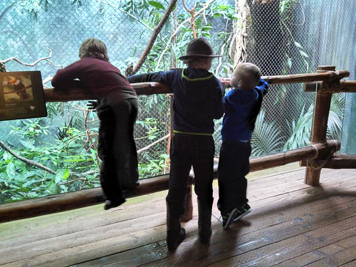 Woodland Park Zoo w/Our Wednesday Homeschool Group
