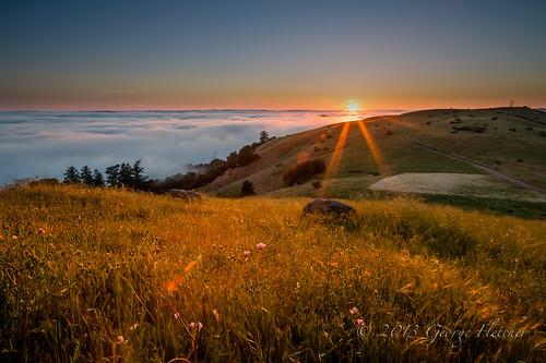 california sunset unitedstates backlit wildflower skylineblvd goldenhour redwoodcity borelmountain