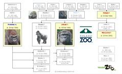 Gorilla Family - Toledo
