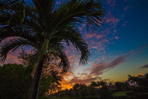 trees sky nature sunrise landscape unitedstates florida dusk scenic palmtree southflorida coralsprings 6d tiltshift eos6d tse17f4l