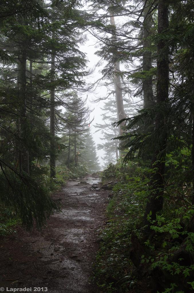 20130622 西穂山荘への登山道