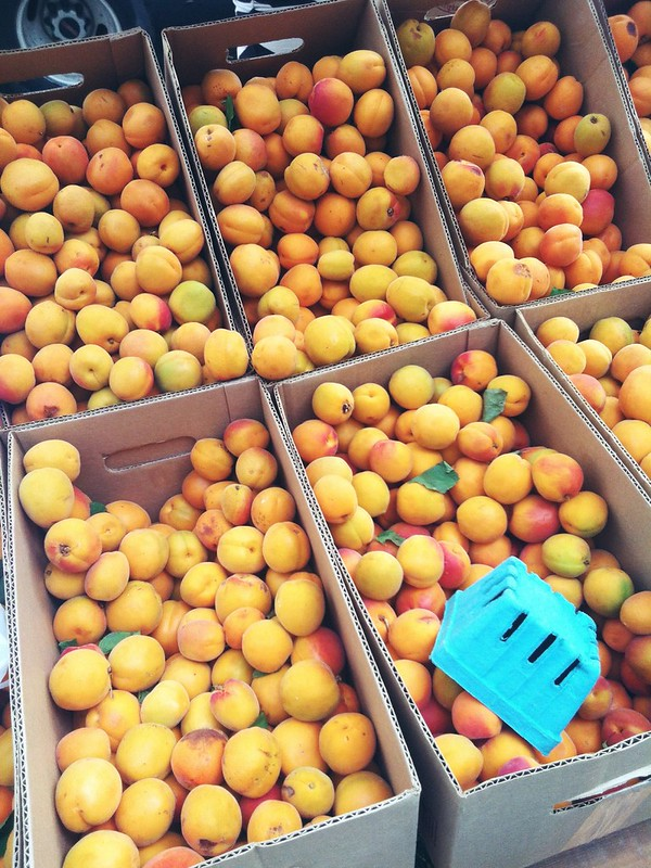 Apricots from the farmers market