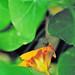 green jumper by BryanBowman