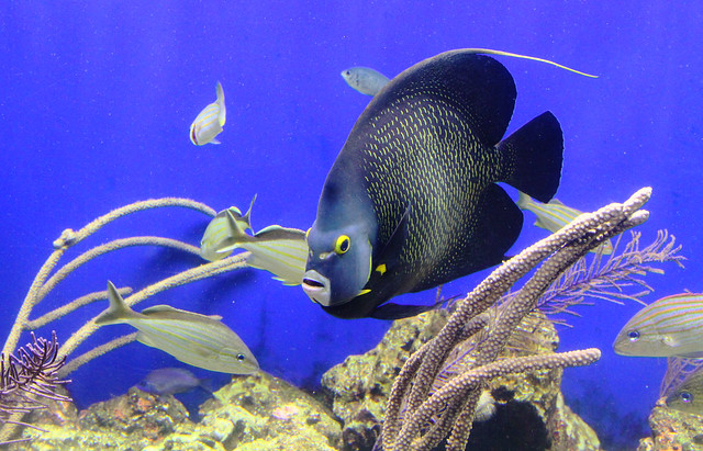 Tropical Blue Fish