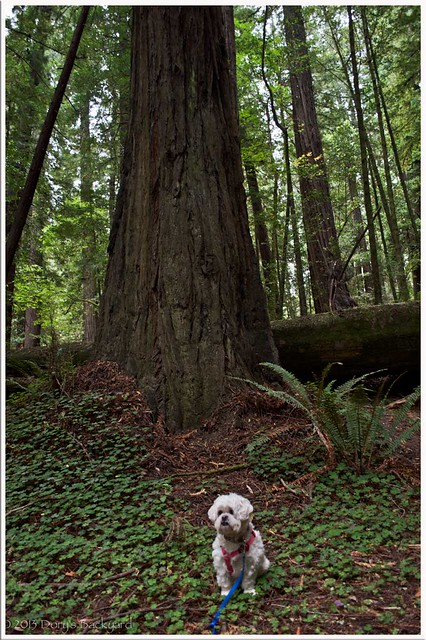 LittleDogBigTree