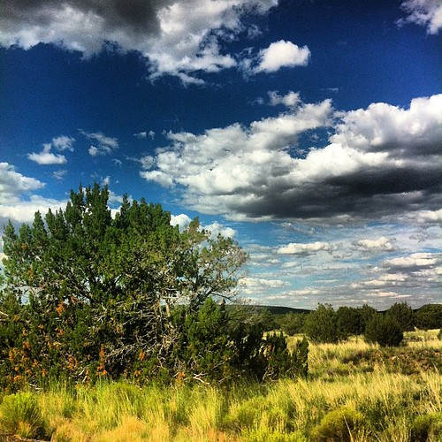 Kaibab National Forest, Arizona. #kaibab #kaibabforest #nationalforest #nationalpark #trees #sky #clouds #natureporn #grass #az #arizona by dsjeffries