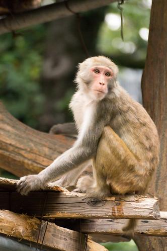 Inogashira_Zoo_Park