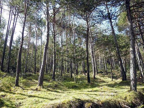El Serradell_trees
