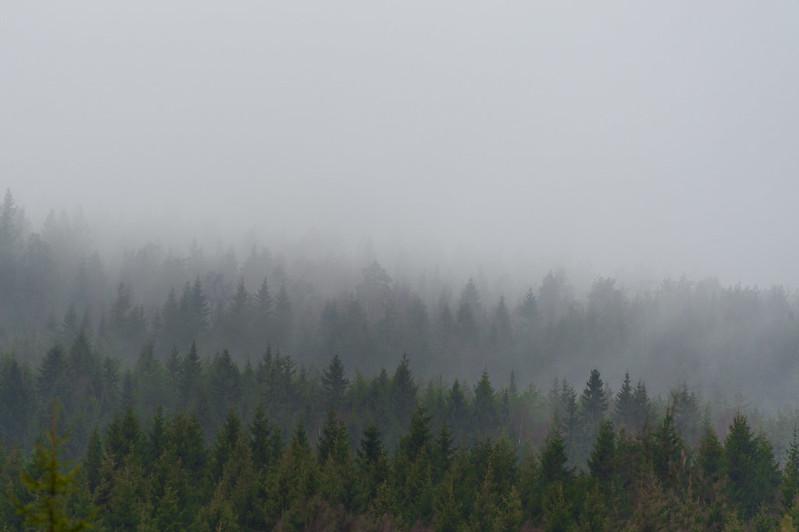 Sognsvann trees