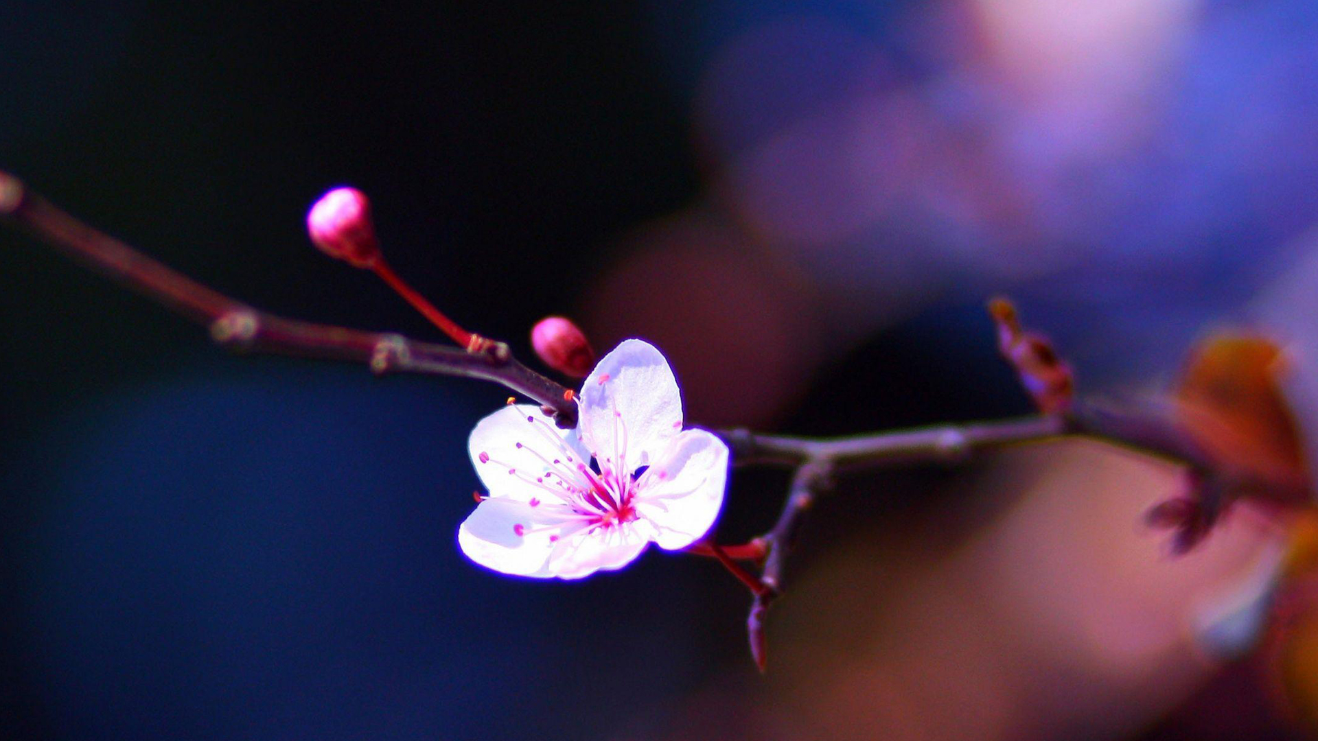 Flower Macro - Top 10 Spring Wallpapers