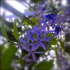 Purple Stars by Debi.Lane-ForTheKingPublications