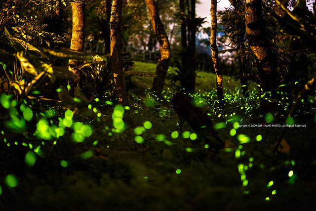 Firefly Galaxy -IMG_9765fu
