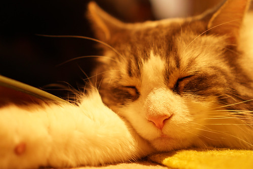 Cat Cafe 03