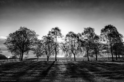 trees light england tree monochrome sunrise blackwhite spring nikon shadows estate shade april stokeontrent wedgwood gbr barlaston benbo leefilters nikkor2470f28 benbotripod leendgrad d800e nikond800e