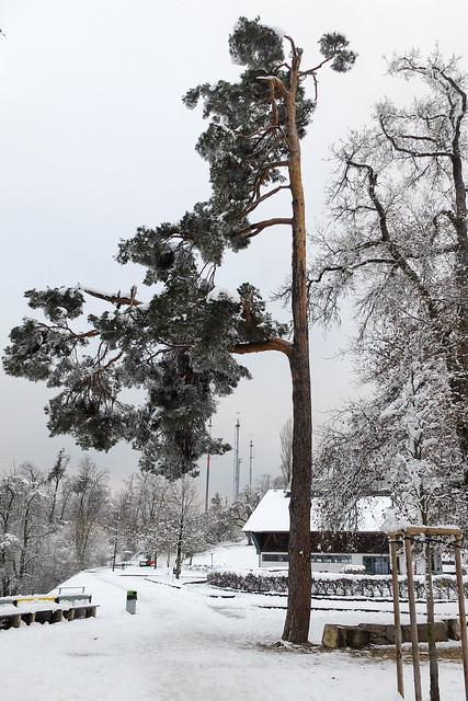 Gurten, January 2015