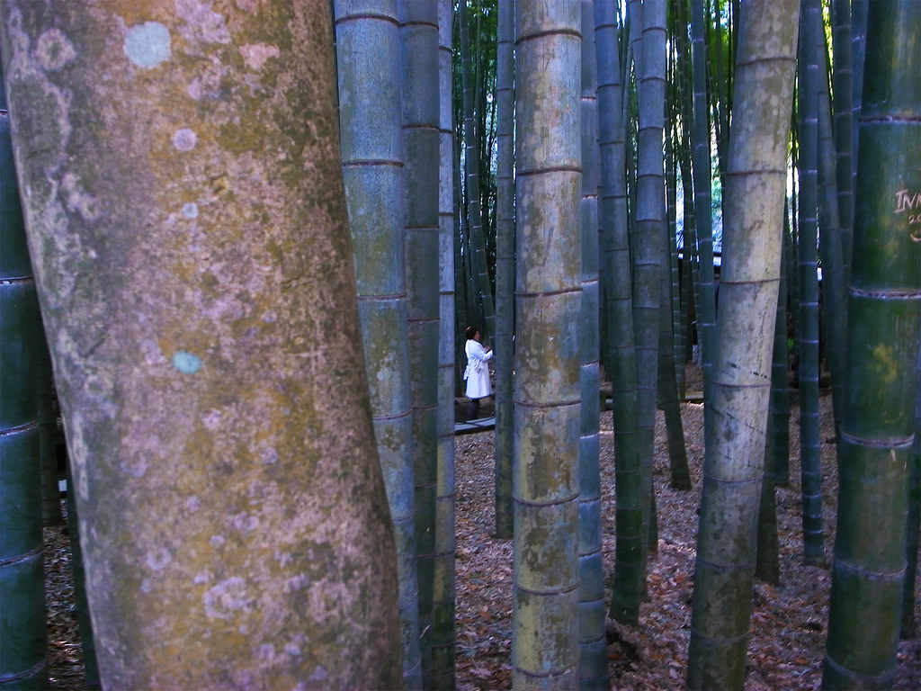 報国寺と竹林と