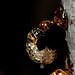 Small photo of Wattle Resin on Acacia pycnantha