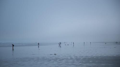 california shells dogs fog clouds canon bay tide brendan moro 6d cleak