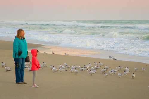 beach birds dawn florida daughter mother indialantic