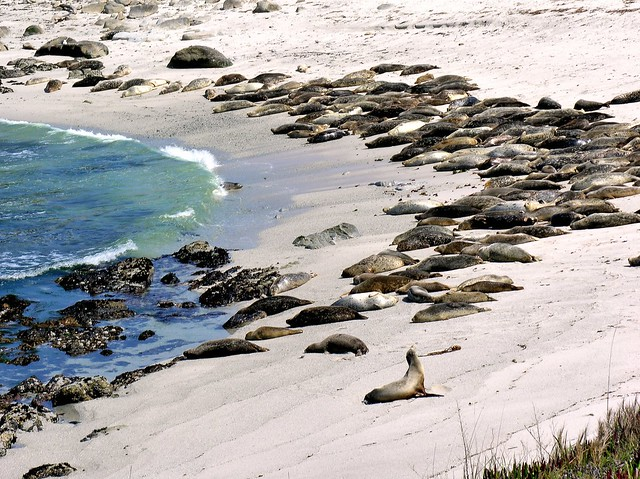 Closer View of Harbor Seals