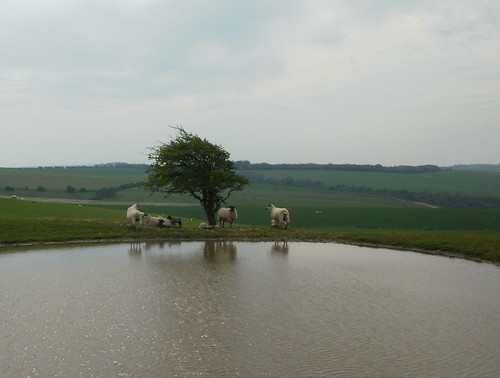 Sheep and dew pond