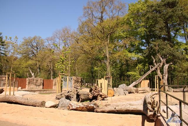 Eisbär Fiete im Zoo Rostock 07.05.2016  018