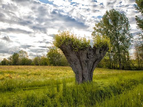A Strange Tree