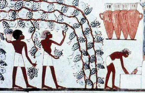 Vinos Egipcio