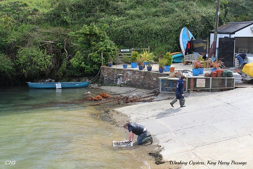 Washing Oysters, King Harry Passage, River Fal by Stocker Images