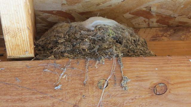CC Nest 1