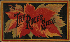Try Rice's seeds. (front)
