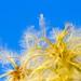 Fuzzy Seeds por bbum