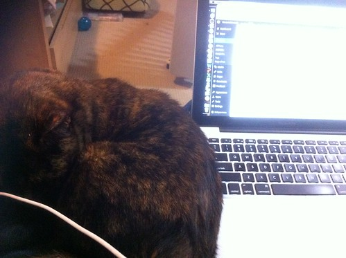 Lap is for cats, not laptops
