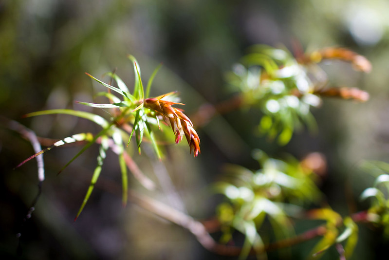Plants in Grand Canyon, blue mountains