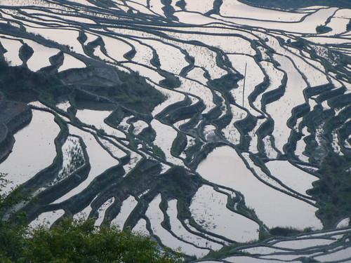 Yunnan13-Yuanyang 1-Duoyishu (11)