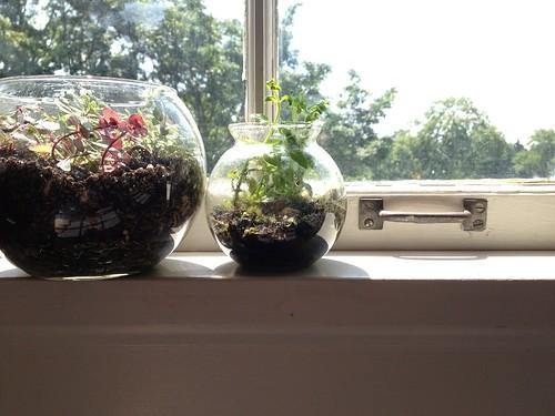 Windowsill Terrariums