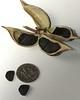 Hesperaloe parviflora, Red Yucca, False Red Yucca, Hummingbird Yucca