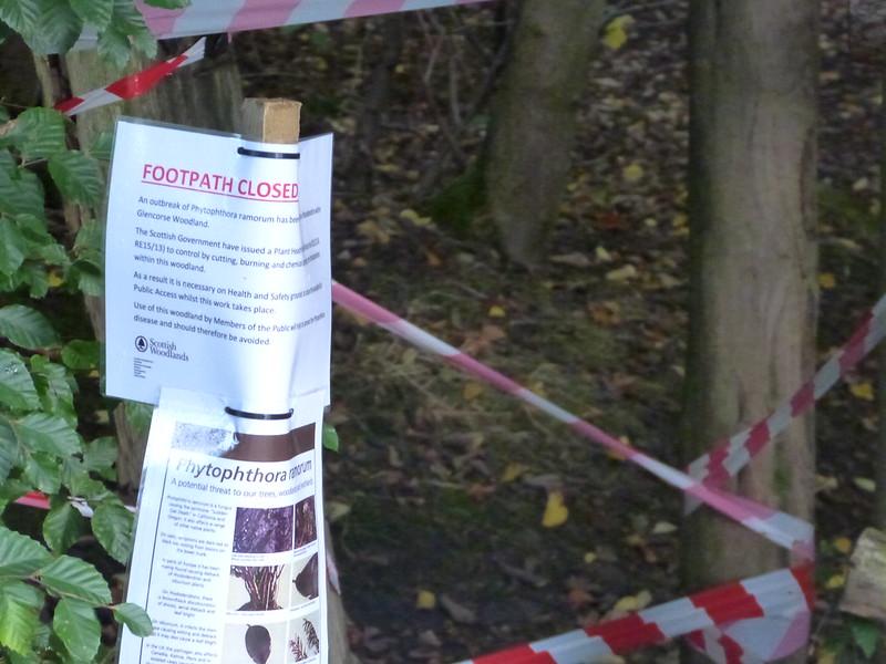 Sudden oak death 9743125936_ab1ab97661_c