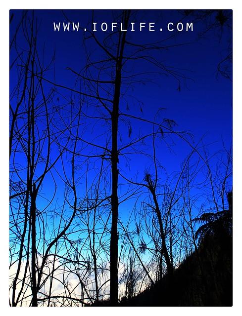 Hutan pinus semeru malam